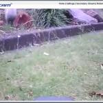 Mähkanten + Rasenkanten - Vor- und Nachteile